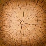 Texture en bois de tronc d'arbre cutted photos libres de droits