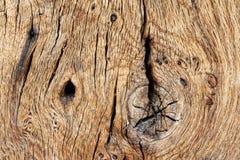 Texture en bois de vieux bois de construction de chêne Image libre de droits