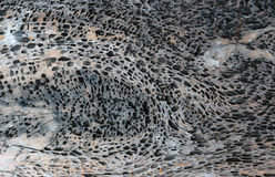 Texture en bois foncée abrégez le fond Photographie stock