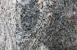 Texture en bois foncée abrégez le fond Photo stock