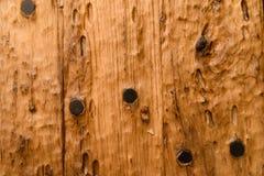 Texture en bois (fond) Image libre de droits