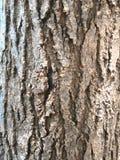 Texture en bois Fond abstrait de texture d'arbre images stock