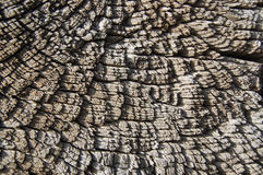 Texture en bois, fond en bois Photographie stock