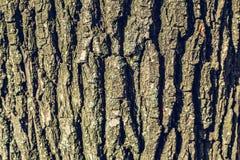 Texture en bois, fond en bois d'écorce Photographie stock libre de droits