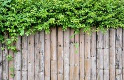 Texture en bois/fond en bois de texture Photographie stock