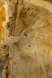 Texture en bois Bois fraîchement scié Photo stock