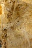 Texture en bois Bois fraîchement scié Photographie stock