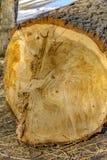 Texture en bois Bois fraîchement scié Photographie stock libre de droits