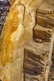 Texture en bois Bois fraîchement scié Image libre de droits