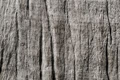 Texture en bois grise de relief avec la fibre de bois images libres de droits