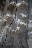 Texture en bois inextricable de vieux tronçon image stock