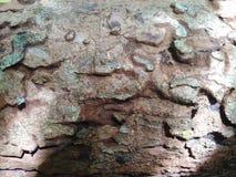 Texture en bois l'écorce du vieil arbre photographie stock libre de droits