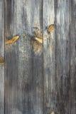 Texture en bois modifiée la tonalité de fond photographie stock libre de droits
