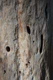 Texture en bois morte Images stock