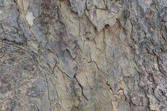 Texture en bois naturelle Écorce d'arbre Texture en bois Texture d'écorce d'arbre Texture tileable de Brown du vieil arbre photos stock