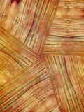 Texture en bois naturelle de grain image stock