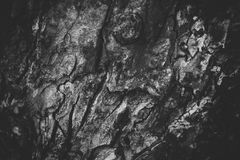 Texture en bois noire et blanche Photo stock