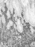 Texture en bois noire et blanche photo libre de droits
