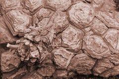 Texture en bois peu commune de plan rapproché de cactus photos libres de droits
