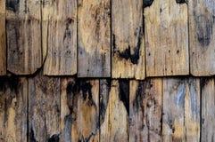 Texture en bois sèche photos stock
