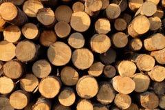 Texture en bois sciée Image libre de droits