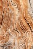 Texture en bois tordue images stock