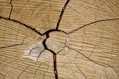 Texture en bois tropicale Image libre de droits