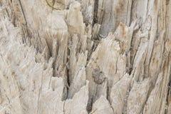 Texture en bois unique Photographie stock libre de droits