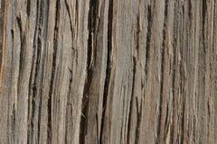 Texture en bois Vue sur une coupe d'un arbre dans des tons beiges photo libre de droits