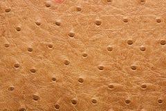Texture en cuir Image stock