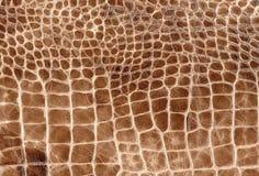 Texture en cuir naturelle de reptile de Brown Modèle de peau de serpent, de crocodile ou de dragon image libre de droits