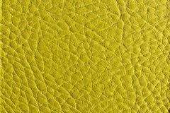 Texture en cuir verte de kiwi Photographie stock libre de droits