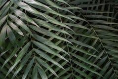 Texture en feuille de palmier Photos libres de droits