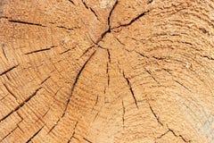 Texture en gros plan d'un arbre Images stock