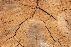 Texture en gros plan d'un arbre Photographie stock