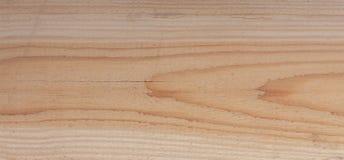 Texture en gros plan d'un arbre Photographie stock libre de droits