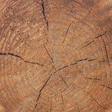 Texture en gros plan d'un arbre Photos libres de droits