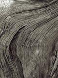 Texture en noir et blanc Photo libre de droits