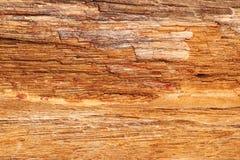 Texture en pierre en bois pétrifiée - fond photographie stock libre de droits