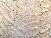 Texture en pierre de tuile dans brun et crème Photo libre de droits