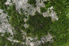 Texture en pierre moussue Images libres de droits