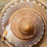 Texture en spirale de Shell naturel photos stock
