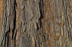 Texture espagnole en bois cru de sapin Photographie stock libre de droits