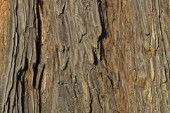 Texture espagnole en bois cru de sapin Photos libres de droits