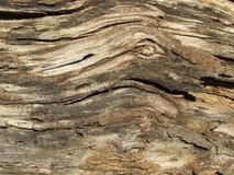 Texture et conception en bois âgé images stock
