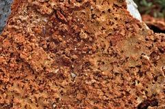 Texture et fond de pierre Couleur rougeâtre brunâtre photographie stock libre de droits