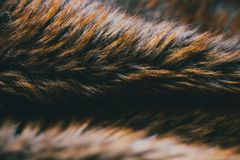 Texture et fond naturels de fourrure de Brown Fond naturel du poil d'animal pour la conception Fermez-vous de la texture animale  Photos libres de droits