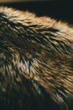 Texture et fond naturels de fourrure de Brown Fond naturel du poil d'animal pour la conception Fermez-vous de la texture animale  Image libre de droits