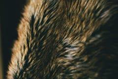 Texture et fond naturels de fourrure de Brown Fond naturel du poil d'animal pour la conception Fermez-vous de la texture animale  Images libres de droits