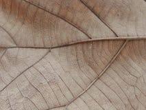 Texture et fond secs de feuille Images stock